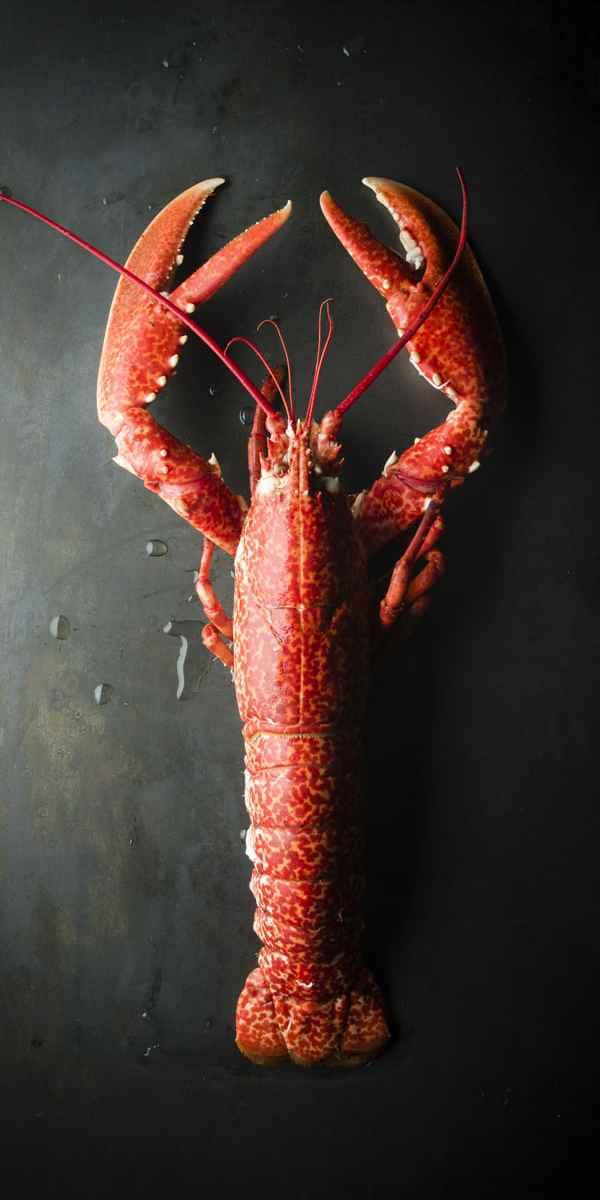 photographe culinaire mer homard