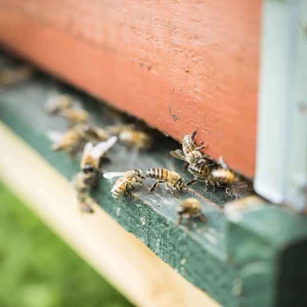 photographe reportage nature societe apiculture campagne abeilles
