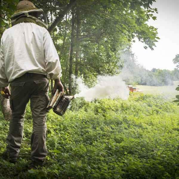 photographe reportage nature societe apiculture campagne apiculteur