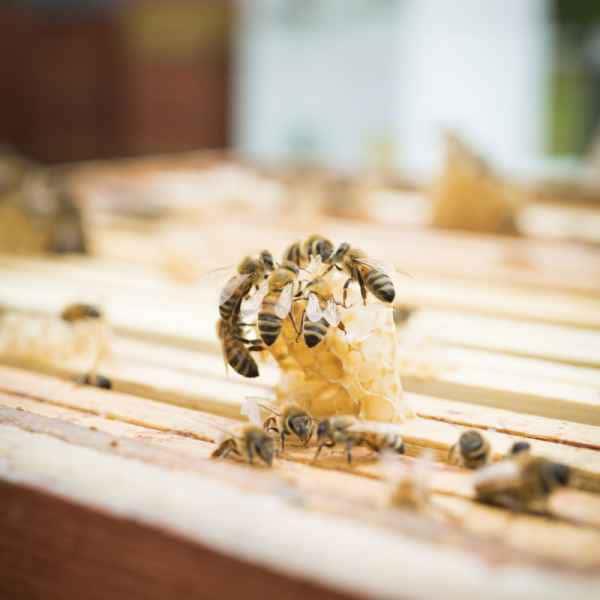 photographe reportage nature societe apiculture campagne echange