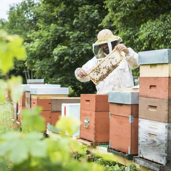 photographe reportage nature societe apiculture campagne recolte