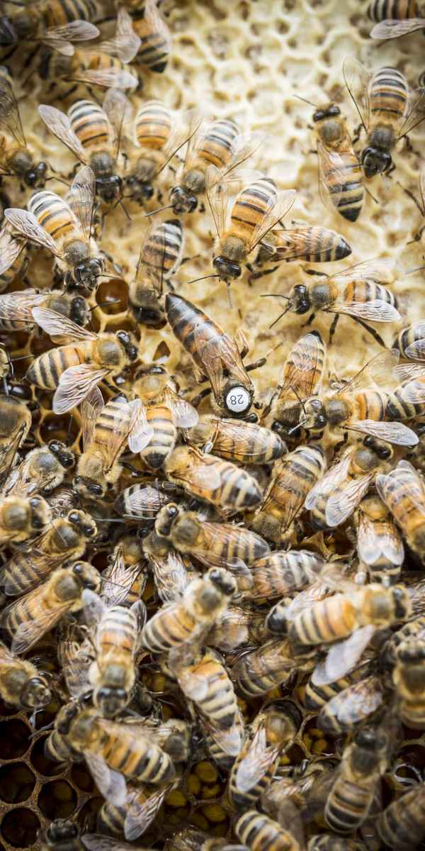 photographe reportage nature societe apiculture campagne reine