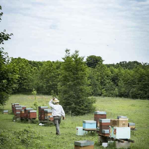 photographe reportage nature societe apiculture campagne rucher