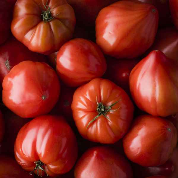 photographe culinaire legumes terroir tomates