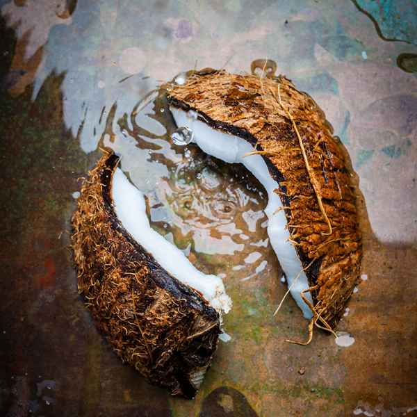 photographe culinaire noix coco